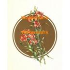 Lilies  - #XBFL1878  -  PRINT