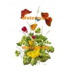 Blossoms & Butterflies  - #XD9171  -  PRINT