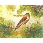 Hawk In Trees  - #XD9499  -  PRINT