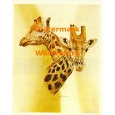 Giraffes  - #XD9111  -  PRINT
