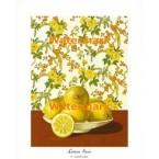 Lemon Sour  - #XKFL9214  -  PRINT