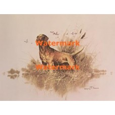 Chesapeake Bay Retriever  - XD10101  -  PRINT