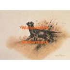 Black Labrador Retriever  - XD10102  -  PRINT