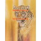 Leopard  - XD8691  -  PRINT