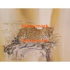 Crouching Leopard  - XD8772  -  PRINT