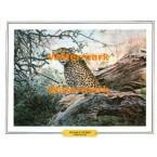 Cheetah's Lair  - #XBAN1123  -  PRINT