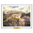 Snow Leopard  - #XBAN1124  -  PRINT