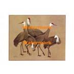 Cranes  - #XBBI-686  -  PRINT