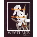 Westlake Iris  - #XBFL1635  -  PRINT