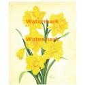 Yellow Daffodils  - #XM4202  -  PRINT