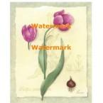 Botanical Tulips I  - #XM4208  -  PRINT
