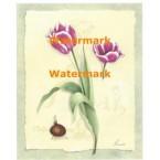 Botanical Tulips II  - #XM4209  -  PRINT