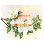 Magnolias I  - #XM455  -  PRINT