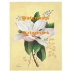 Magnolia  - #XM466 -  PRINT