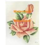 Peach Rose  - #XM477  -  PRINT