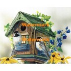 Home Sweet Home Chickadees - #XM9050  -  PRINT