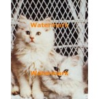 Wicker Chair Kittens  - #XS10830  -  PRINT