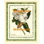1.  Magnolia  - #XS13111  -  PRINT