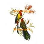 Birds  - XS5907  -  PRINT