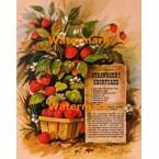 Old-Fashioned Strawberry Shortcake  - XS6146  -  PRINT