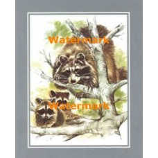 1.  Raccoon Family  - #XS8530  -  PRINT