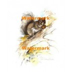 Squirrel  - XS3544  -  PRINT