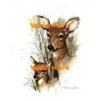 Deer  - #XS3547  -  PRINT