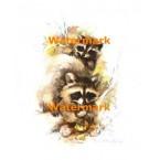 Raccoons  - #XS3548  -  PRINT