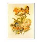 Butterflies  - #XS3475  -  PRINT