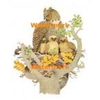 Owl Family  - #XS2851  -  PRINT