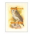 Owl  - #XS3697  -  PRINT