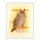 Owl  - #XS3700  -  PRINT