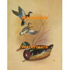 Ducks & Decoy  - XS5484  -  PRINT