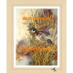 Wood Duck:  Marsh Reed Duckport  - XS12203  -  PRINT