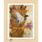 Mallard:  Marsh Reed Duckport  - XS12204  -  PRINT