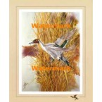 Pintail:  Marsh Reed Duckport  - XS12205  -  PRINT