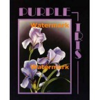 Purple Iris  - #XS6367  -  PRINT