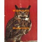 Owl  - #XS4690  -  PRINT