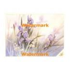 Purple Irises  -  XS11472  -  PRINT