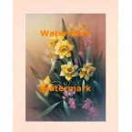 March-Jonquil  -  XS17527  -  PRINT