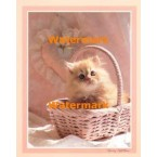 Kitten  - #XS12235  -  PRINT