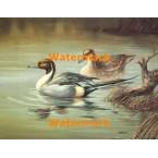 Ducks  - #XS10246  -  PRINT