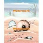 Sandy Beach Seashells  - #XS12665  -  PRINT
