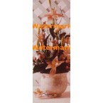 Lattice Florals  - XS11527  -  PRINT
