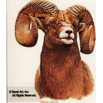 Rocky Mt. Bighorn Sheep  - #BOR11  -  PRINT