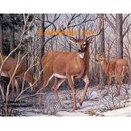 White Tailed Deer  - #BOR31  -  PRINT