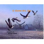 Geese Over Farm Field  - #BOR54  -  PRINT