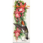 Hummingbird with Fuchsia  - COR117  -  PRINT
