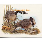Canadian Geese  - #COR12  -  PRINT