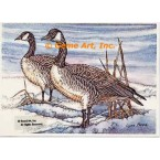 Canadian Geese  - #COR24  -  PRINT